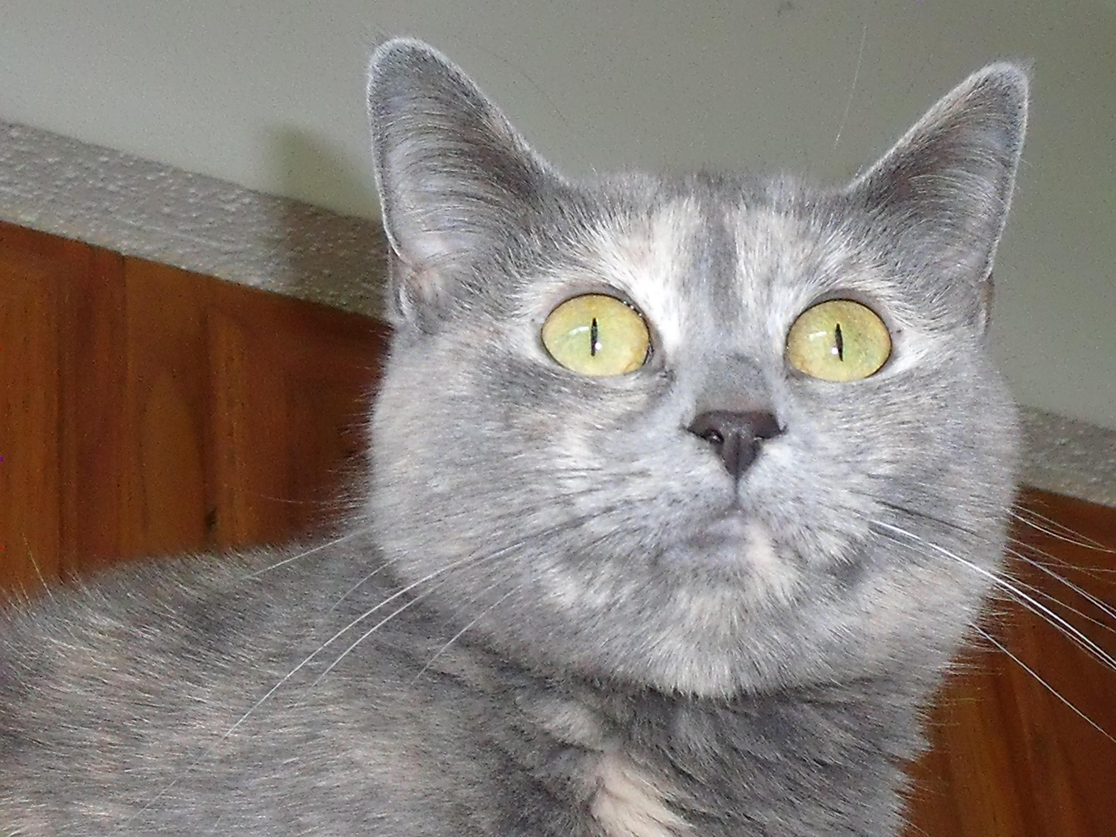 cat life chart