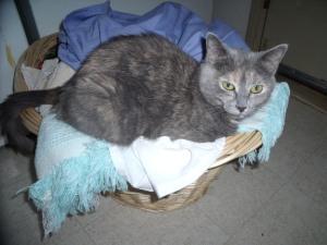 Spook, my little laundress