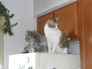 Spook and Scout on their perch...together...