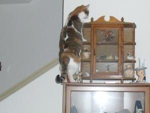 Scout climbing high